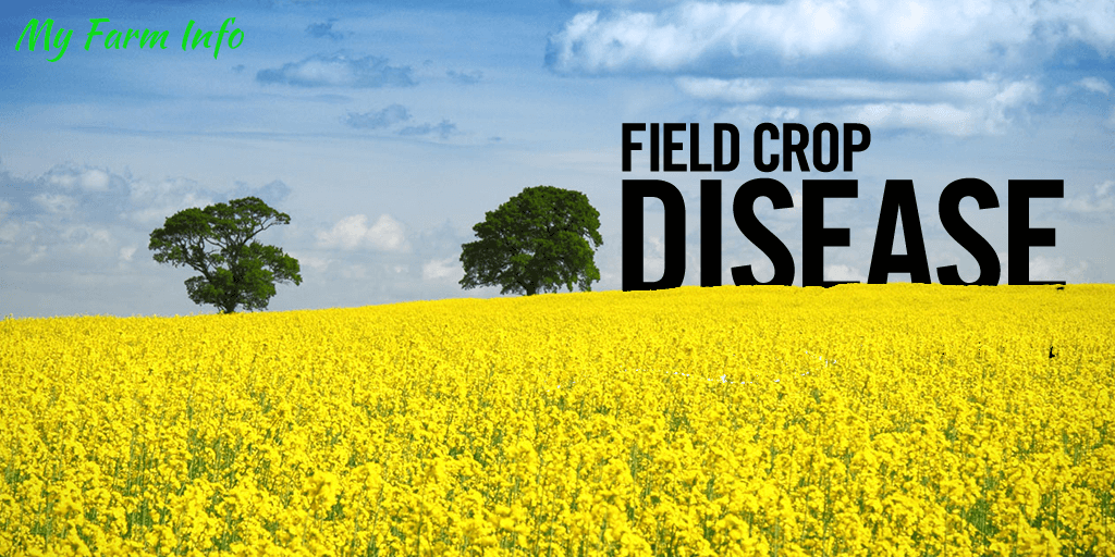 What you need to know about field crop diseases and how to prevent it